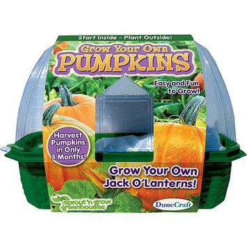Dunecraft SG-0108 Grow Your Own Pumpkins