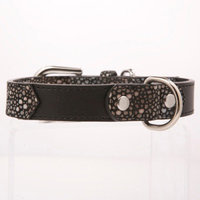 Kane & Couture Urban Sting Collar Size: Extra Large (0.2