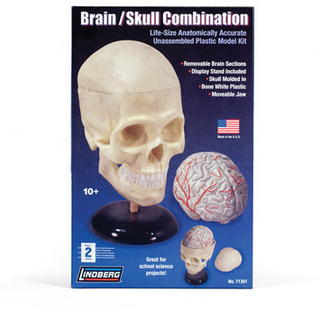 Lindberg Human Brain and Skull Combination Model Kit
