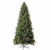 Member's Mark 7.5ft pre-lit Norway Spruce Christmas Tree