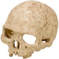 Hagen Exo Terra Terrarium Decor Human Skull
