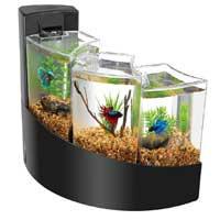 Aqueon Black Betta Falls Aquarium Kit, 2 galllon ()