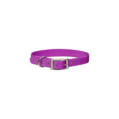 Coastal Pet Metal Buckle Nylon Personalized Dog Collar in Orchid, 1 Width
