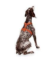 Planet Dog  Hemp Harness/Seatbelt