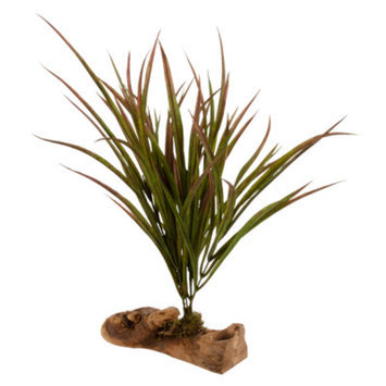 All Living ThingsA Decorative Reptile Plant