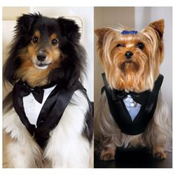 Weddingstar 6007 Pet Tux - Medium