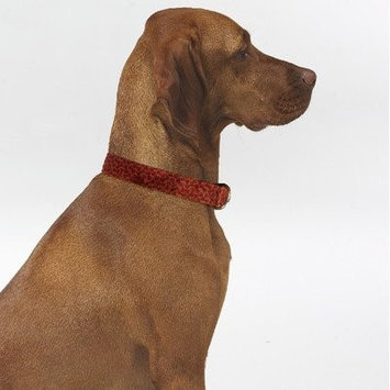 Bowsers Triple Layer Bones Dog Collar - Size: Large, Color: Cherry Bones