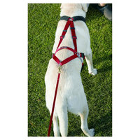 Ultra Paws Dog Harness - Huge