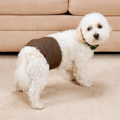 Doctors Foster & Smith Medium Male Dog No-Leak Wrap (Brown)