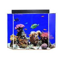Uniquarium Aquarium Tank Color: Black Back, Size: 20