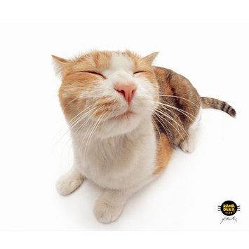 Allsop Clean-screen Cloth Pet Me Cat - MicroFiber