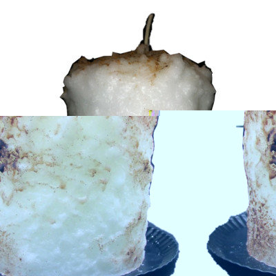 Starhollowcandleco Toasted Marshmallow Pillar Candle Size: Tall Fatty 6.5