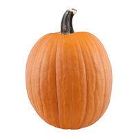 Pumpkin Medium/Large