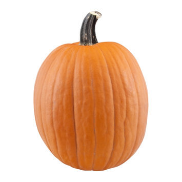 Pumpkin Medium/Large