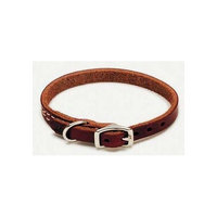 Coastal Pet igo Leather Dog Collar in Latigo