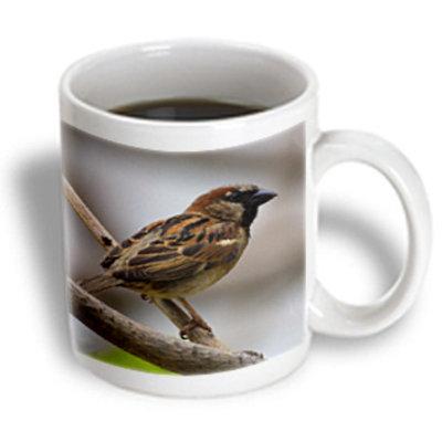Recaro North 3dRose - Birds - House Sparrow - 11 oz mug