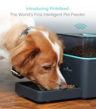Pintofeed Pet Feeder
