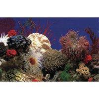 Penn Plax DB5 Amazon Waters II / Coral Reef