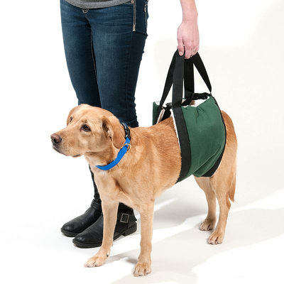 Doctors Foster & Smith Extra-Large Breed Comfort Lift Dog Carrier (Green)