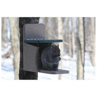 Bird's Choice Birds Choice SNSQ Recycled Squirrel Feeder Munch Box
