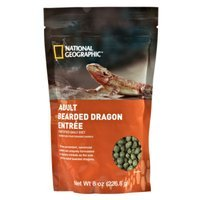 National Geographic Adult Bearded Dragon Entree