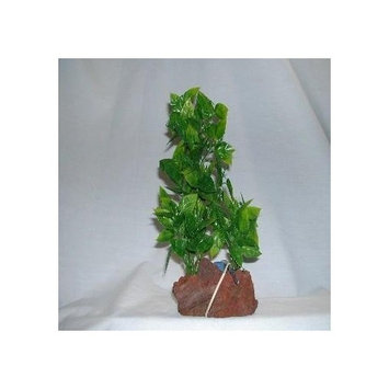Rocky Mountain Plants ARCMB1 Aerating Double Plant on Lava Rock, 9 to 10-Inch, Green