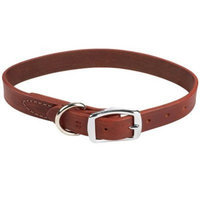Coastal Pet igo Leather Dog Collar in Latigo