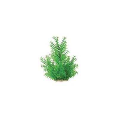 Pure Aquatic Natural Elements Ambulia Aquarium Ornament in Green Size: 5