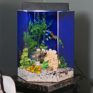 Clear-for-life Clear For Life Hexagon Aquarium Black, Size: 12-Gal (15W x 16H in.)