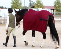 EOUS Wool Show Rug 57 Berry/Navy
