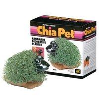 CHIA Pet Frog