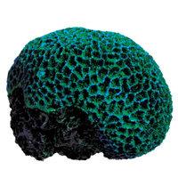 Top Fin Artifical Coral Brain Aquarium Plant