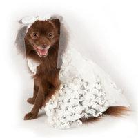 Top PawA Wedding Dress & Veil