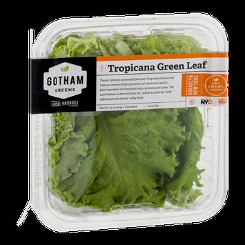 Gotham Greens Tropicana Green Leaf