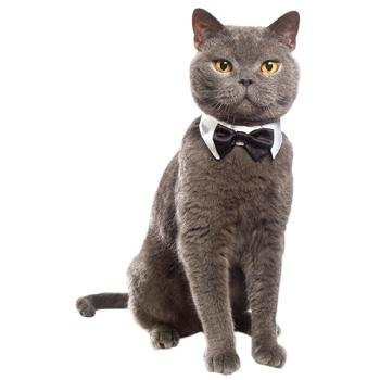 Petco Collar and Bowtie Halloween Costume for Cats
