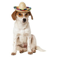 Rubie's Sombrero Pet Costume - M/L