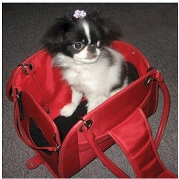 Snoozer-Open Pet Tote