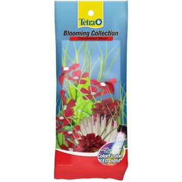 TETRA Blooming Collection Grass/Geranium/Dahlia Plants