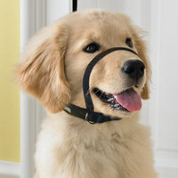 Martha Stewart PetsA Training Head Collar