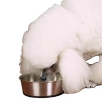 ProSelect SS Dog Bowl with Rubber Base 9OZ