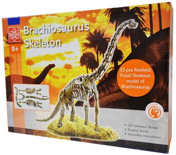 Edu Science Brachiosaurus Skeleton