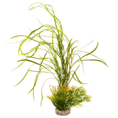 Top Fin Lily Grass