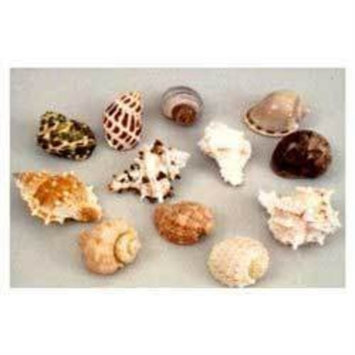 Mojetto Florida Marine Research SFM34332 12-Pack Hermit Crab Shell, Large
