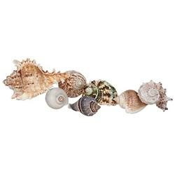 Zoo Med Laboratories SZMHC36 Hermit Crab Growth Shell