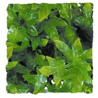 Zoo Med Laboratories SZMBU12 Natural Bush Congo Ivy