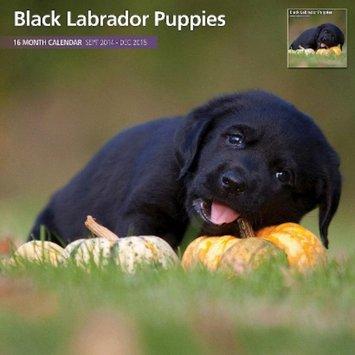 Magnet and Steel INC Black Labrador Dog Puppies 2015 Wall Calendar