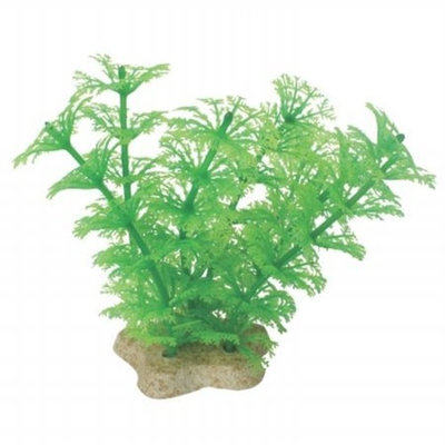 Pure Aquatic Natural Elements Cabomba for Fish and Aquatic, Color: Green , Size: 4-5 INCH