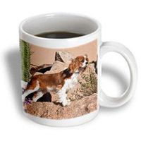 Recaro North 3dRose - Danita Delimont - Dogs - Cavalier King Charles Spaniel dog - US03 ZMU0008 - Zandria Muench Beraldo - 11 oz mug