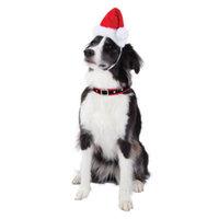 Top PawA Pet HolidayTM Music & LED Santa Hat