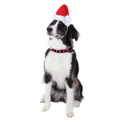Top PawA Pet HolidayTM Music & LED Santa Hat